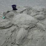 sand turtle at sunset beach