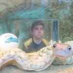 puff fish at the aquarium